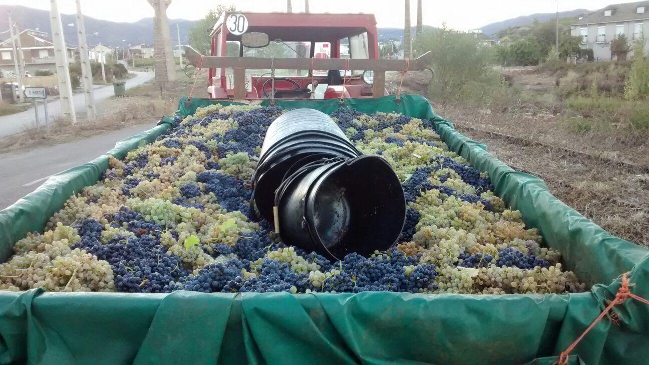 Tractor con uva Mencia y Godello, Bierzo