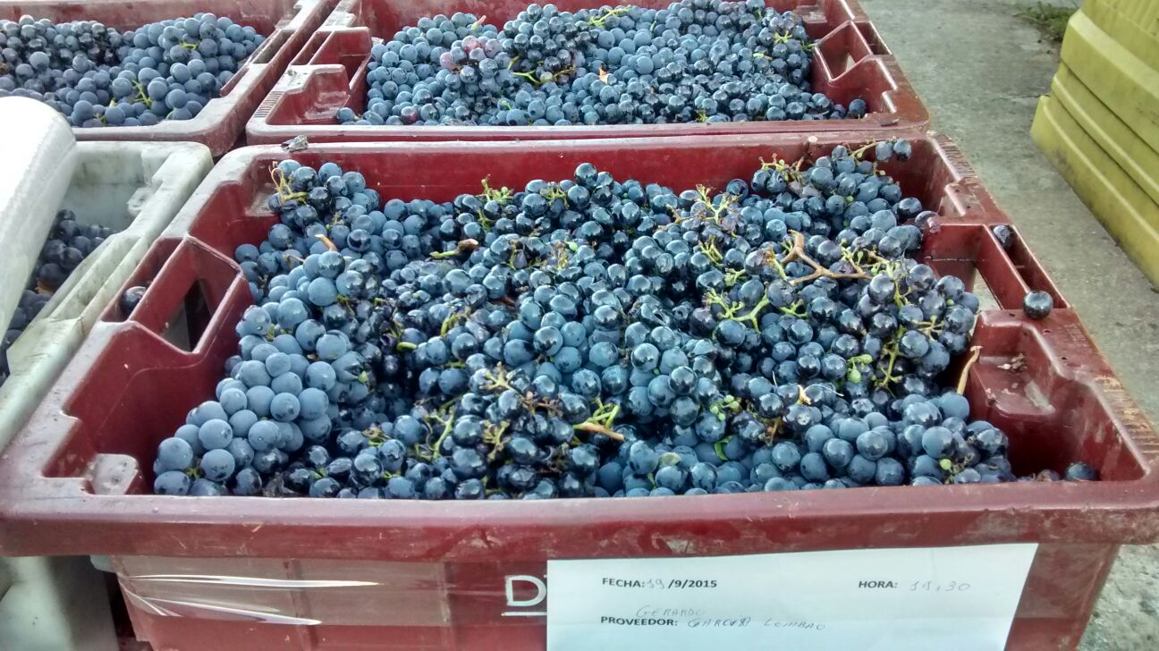 Cajas de uva Mencía, Dominio de Tares